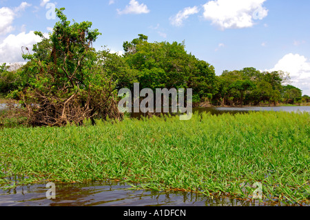 Flooded area in the Amazon rainforest, Brazil - Stock Photo