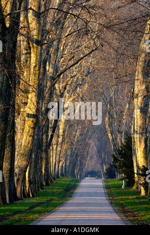 Park avenue in Stuttgart - Stock Photo
