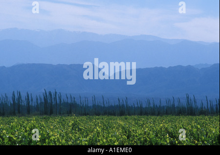 Antique vineyard down slope Precordillera San Juan Province Argentina south america - Stock Photo