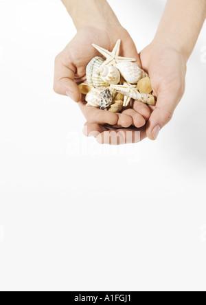 Hands holding seashells - Stock Photo
