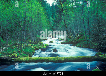 Roaring River with new Spring growth Oregon - Stock Photo
