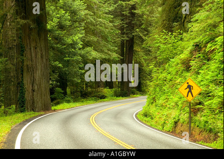 Highway curve, pedestrian crossing sign. - Stock Photo