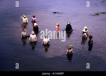 Women cleaning out the moat around Angkor Wat in Cambodia - Stock Photo