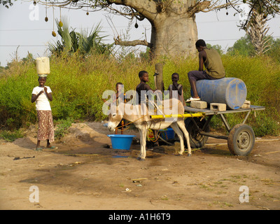 Children help fill water basins and barrel on donkey cart at village well near Kartong The Gambia - Stock Photo