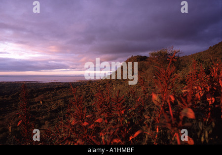 Lake Manyara national park - Stock Photo