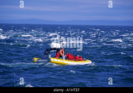 Group on boat to sea whales at Tadoussac Canada - Stock Photo