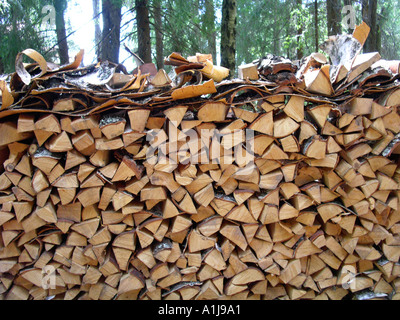 Log pile stacked between two pine trees and topped by layer of bark for protection - Stock Photo