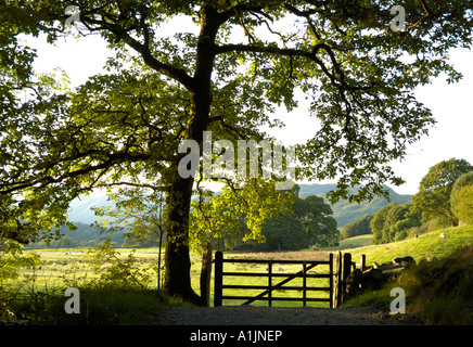 Tree and gate near Elter Water in the Lake District, Cumbria, England - Stock Photo