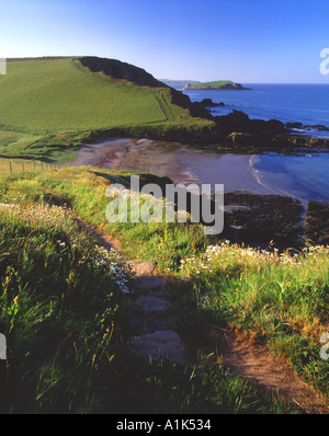 A section of coastpath surrounded by wildflowers leading down to Westcombe bay, Scobbiscombe,Ayrmer Cove South Devon - Stock Photo