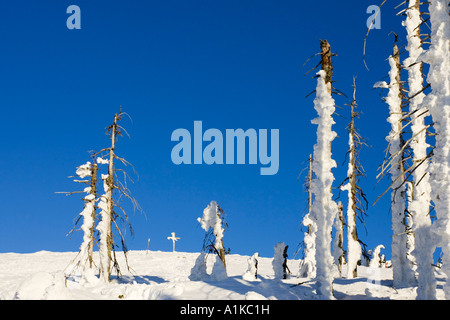 Winter landscape on a mountain, named Lusen. (1373 m) The forest was destroyed by bark-beetles. On the top is the - Stock Photo