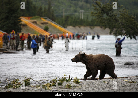 Fishermen flyfishing at the confluence of the Russian and Kenai Rivers as a Grizzly Bear walks along the shoreline - Stock Photo