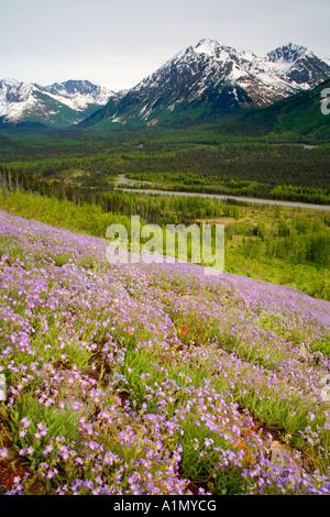 Wildflowers bloom along the Seward Highway Kenai Peninsula Chugach National Forest Alaska - Stock Photo
