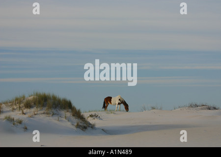 Assateague Island in Maryland and it s southern half Chincoteague Island in Virginia is a barrier island on the - Stock Photo