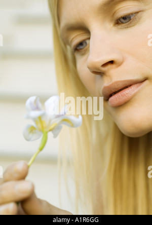 Woman looking at flower, close-up - Stock Photo
