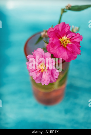 Peonies in vase - Stock Photo