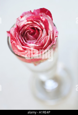 Peony flower in glass - Stock Photo