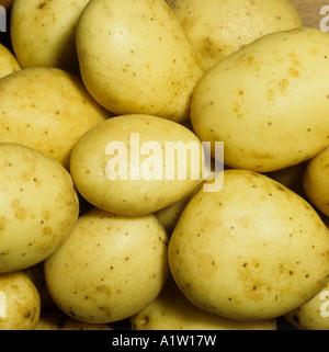 Potato tubers variety Maris Piper post harvest retail quality - Stock Photo