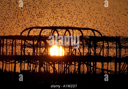 Starlings roost on the skeleton of Brightons burnt out West Pier - Stock Photo