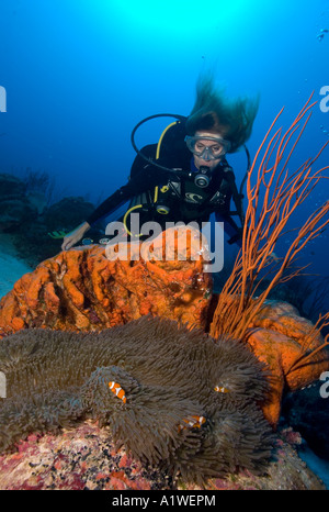 A FEMALE SCUBA DIVER OBSERVES A TRIO OF FALSE CLOWN ANEMONEFISH AMPHIPRION OCELLARIS IN A GIANT ANEMONE PAPUA NEW - Stock Photo