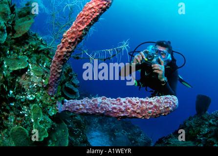 Purple Branching Vase Sponge Stock Photo 32585232 Alamy