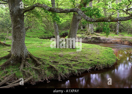 Ober Water in the New Forest National Park, Hampshire, England - Stock Photo