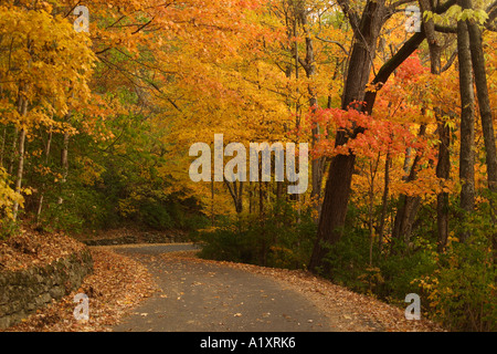 Fall trees in Percy Warner Park in Nashville, Tennessee USA. - Stock Photo
