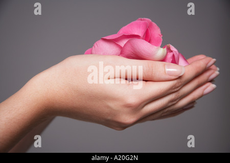 Woman cupping hands full of pink rose petals, close-up on hands - Stock Photo