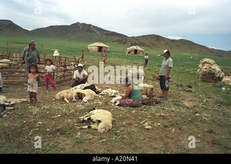 A family of nomadic sheep herdsmen shear their flock of sheep near their ger hut tents in which they live, Mongolian - Stock Photo