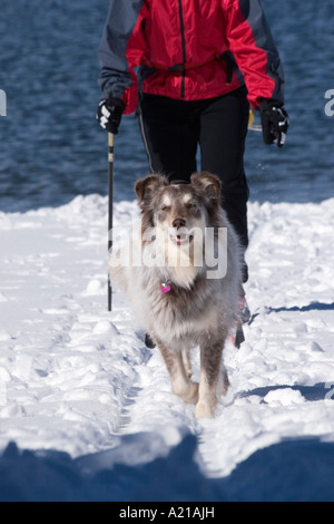 A woman and dog skiing on the shore of Donner Lake in winter near Truckee California - Stock Photo