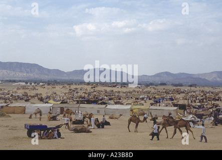 Camels at the Pushkar annual fair, the largest animal fair in the world. - Stock Photo