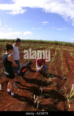 Gay robinson sugar plantation