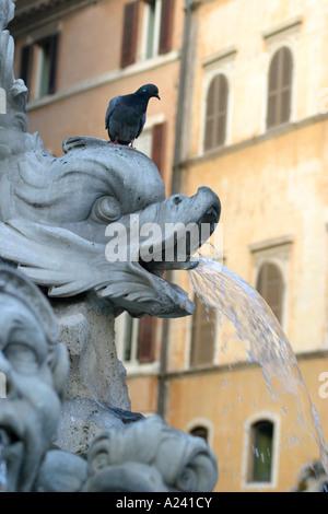bird on the nose of a dolphin of the famous landmark Jacopo della Porta fountain in Piazza della Rotondo Rome - Stock Photo