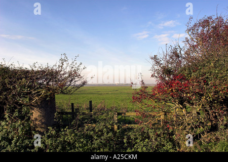 Red berrys framing field with Heysham Nuclear Power Station in distance - Stock Photo