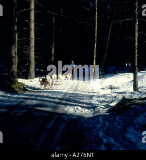 sled dog racing, Bavarian Forest, Bavaria, Germany. Photo by Willy Matheisl - Stock Photo