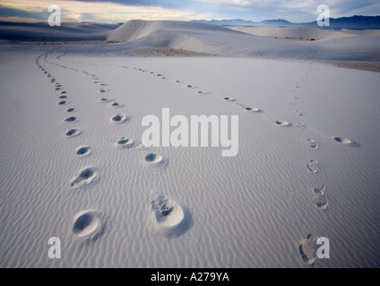 footprints in wind sculpted white gypsum dunes, early morning, in the White Sands National Monument, New Mexico, - Stock Photo
