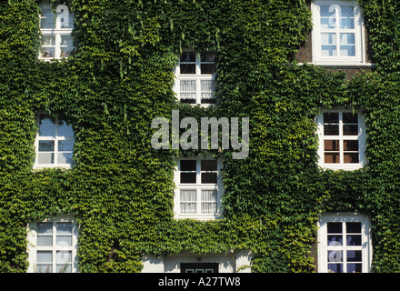 DEU Germany Essen Facade of a house overgrwon by ivy - Stock Photo