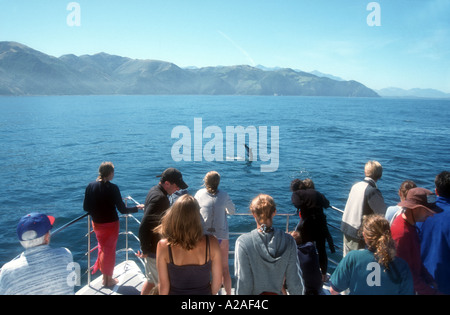 People watching Dusky Dolphins from a trip boat off Kaikoura South Island New Zealand - Stock Photo