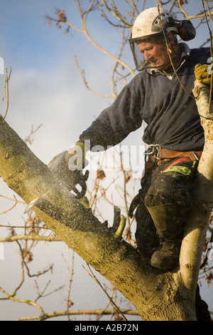 Tree surgeon in action wearing protective helmet visor and harness using chainsaw to cut branch with sawdust flying. - Stock Photo