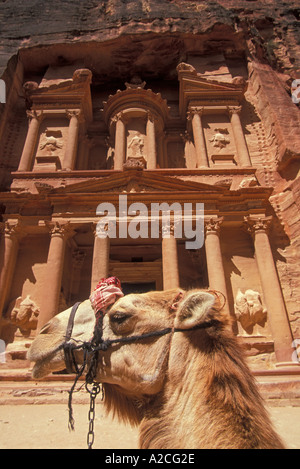 Camel in Front of the carved facade of al Khazneh the treasury in the rose gold city of Petra Jordan Middle East - Stock Photo