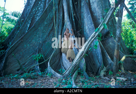 boys from a Yagua Tribe living near Iquitos using the lianas of a giant tree as swings - Stock Photo