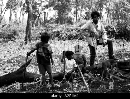 Guarani-Kaiowa indians in Brazil's Matto Grosso do Sul state survey damage done to sacred land by illegal logging - Stock Photo