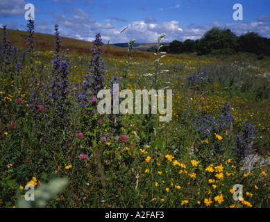 Bank of wild flowers beside cycle route between Lanchester and Durham City, Browney Valley, County Durham, England, - Stock Photo