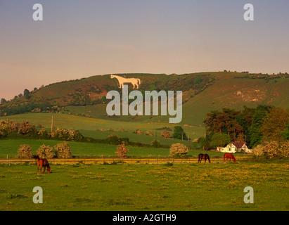 Westbury White horse in Wiltshire - Stock Photo