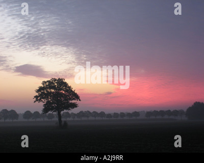 red early morning sky just before sunrise with prominent single tree in rural landscape - Stock Photo