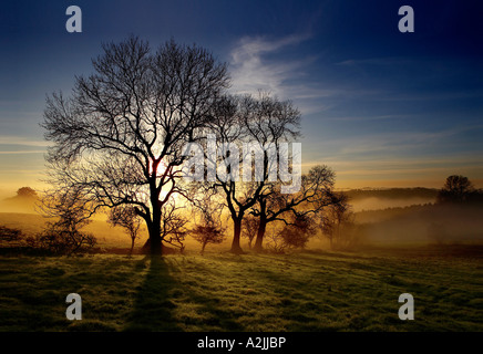Late afternoon sunlight shines through an Ash Tree, Fraxinus excelsior, and autumn ground mist on the wolds, East - Stock Photo