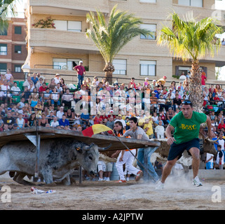 Angry bull chasing man during the annual festival of Benicarlo Spain - Stock Photo