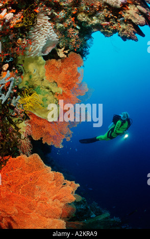 scuba diver in coral reef - Stock Photo