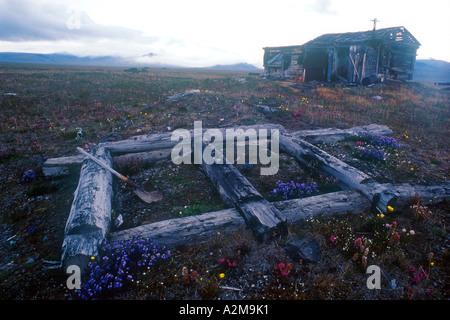 Russia's Far East, Wrangel Island, separates East Siberian Sea from the Chukchi Sea. - Stock Photo