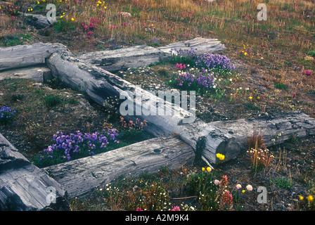Russia's Far East - Wrangel Island. Tundra in flower on Wrangel Island. - Stock Photo