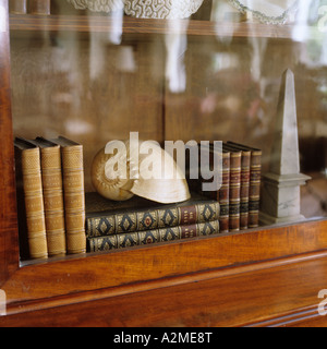 Seashell on book pile in a glass-fronted bookcase. - Stock Photo